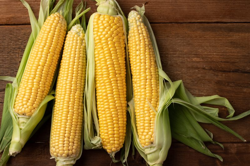 friss kukorica